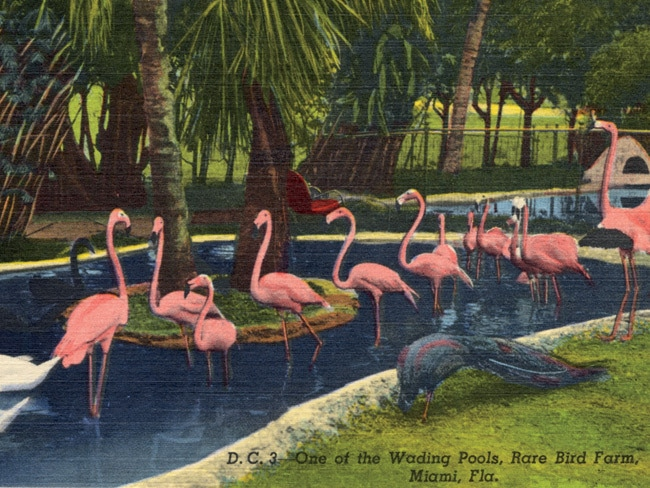 1 - Miami History, As Told by Vintage Postcards