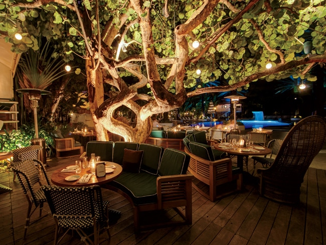 Michael schwartz s culinary love note to south beach
